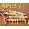 石家庄回收冬虫夏草15673275555个人礼品虫草回收