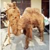 仿真骆驼标本影视道具模型1比1大型骆驼真实大小场馆博物馆用