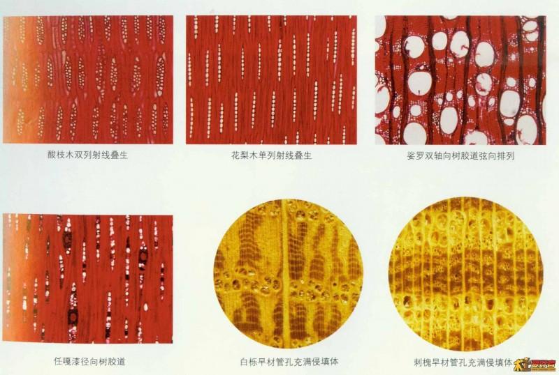 天津进口木材树种检验机构