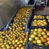 东莞高价回收饮料设备,肉制品设备,各种食品设备
