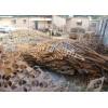 石家庄废钢铁回收,xunshou新钢铁回收价格,石家庄废铁回收公司