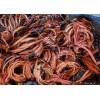 濟寧電纜回收山東濟寧電纜回收價格