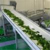 现金回收果蔬生产线