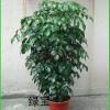 北京花卉租擺公司