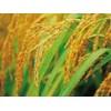 广州稻米回收