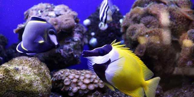 青岛观赏鱼专业进口报关代理