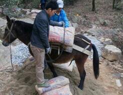 马帮运输队运输建设材料上山